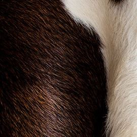 Cowhide & Exotic Rugs